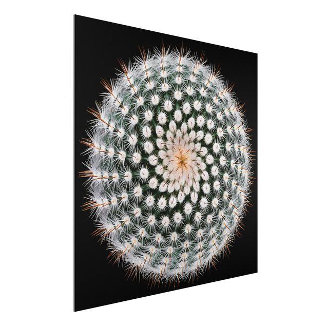 Alu-Dibond Bild - Kaktusblüte