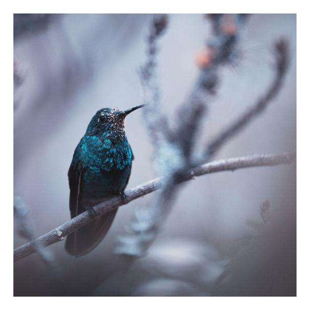 Alu-Dibond Bild - Kolibri im Winter