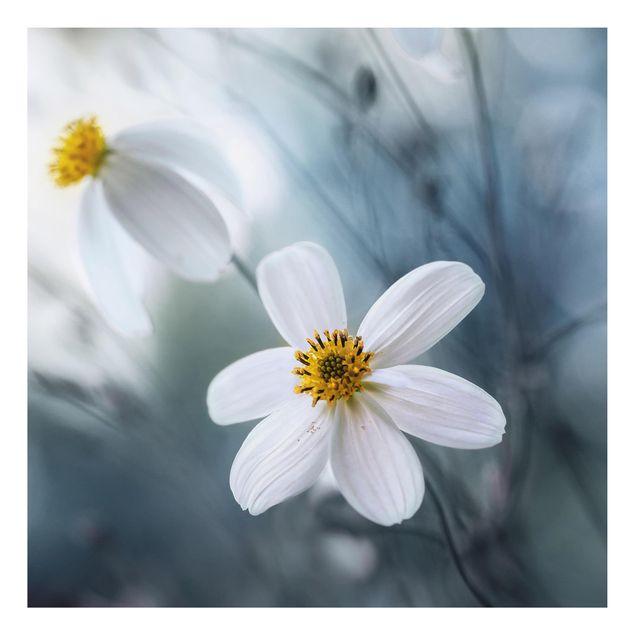 Alu-Dibond Bild - Kosmeen in Pastell