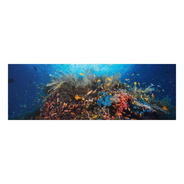 Alu-Dibond Bild - Lagune mit Fischen