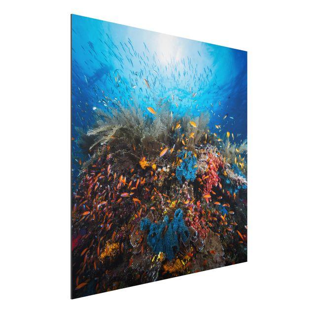 Alu-Dibond Bild - Lagune Unterwasser