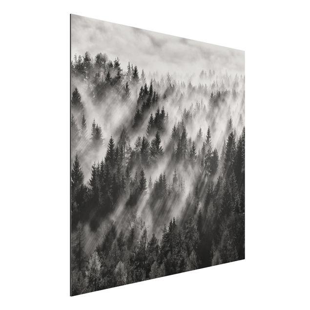 Aluminium Print - Lichtstrahlen im Nadelwald - Quadrat 1:1