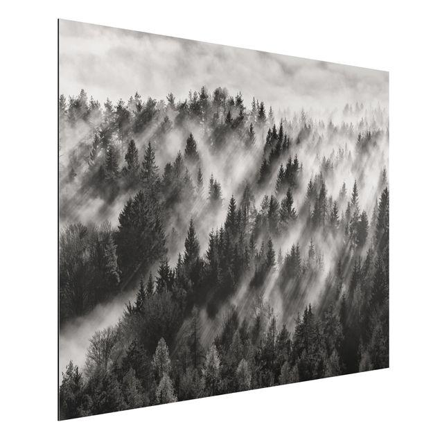 Aluminium Print - Lichtstrahlen im Nadelwald - Querformat 3:4