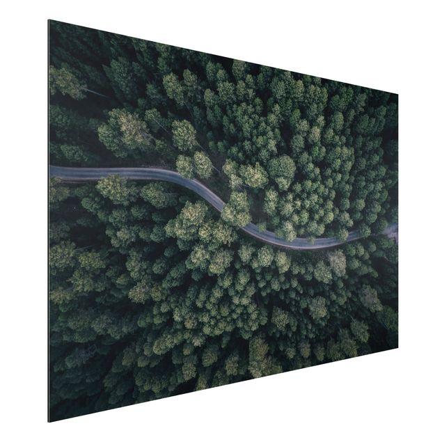 Aluminium Print - Luftbild - Waldstraße von Oben - Querformat 2:3