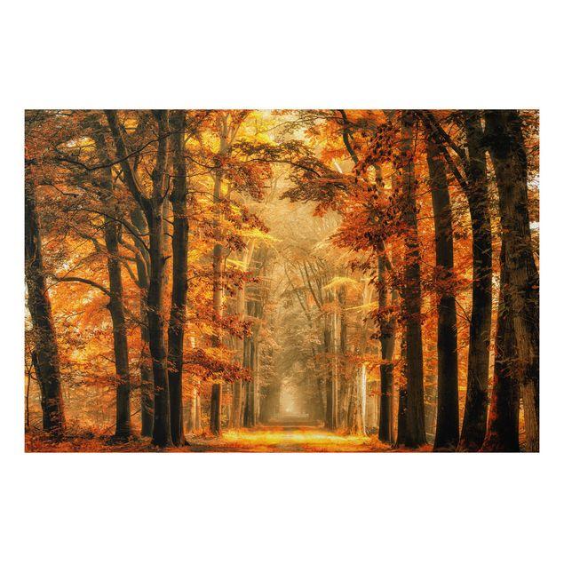 Alu-Dibond Bild - Märchenwald im Herbst