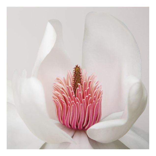 Alu-Dibond Bild - Magnolie in Pink