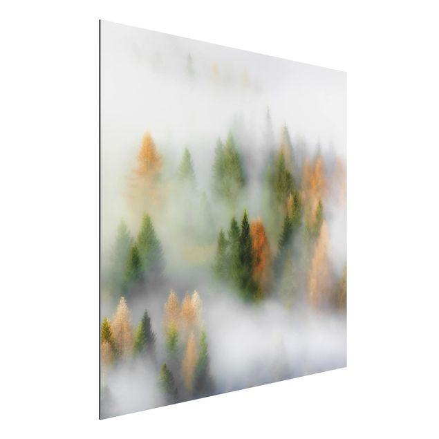 Aluminium Print - Nebelwald im Herbst - Quadrat 1:1
