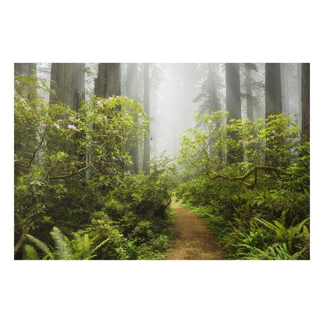 Alu-Dibond Bild - Nebliger Waldpfad