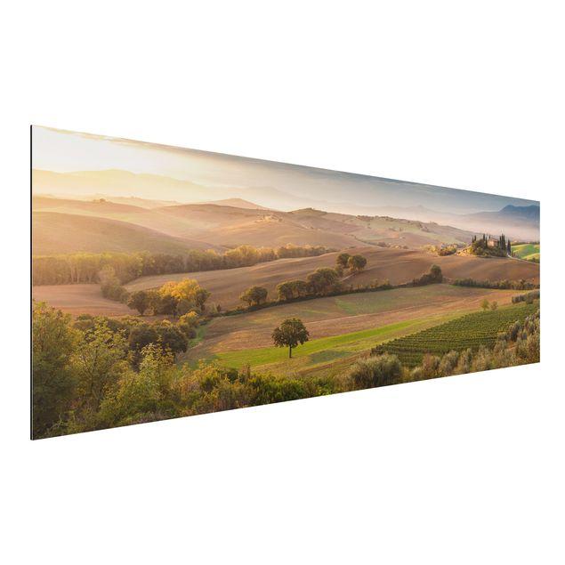Alu-Dibond Bild - Olivenhain in der Toskana