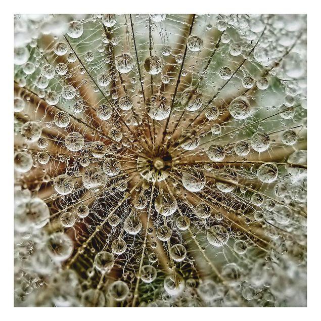 Alu-Dibond Bild - Pusteblume im Herbst