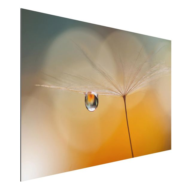 Alu-Dibond Bild - Pusteblume in Orange