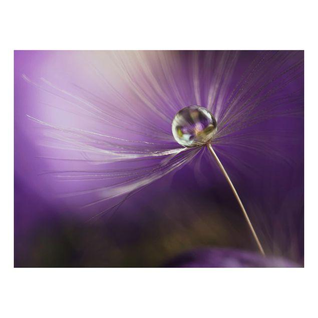 Alu-Dibond Bild - Pusteblume in Violett