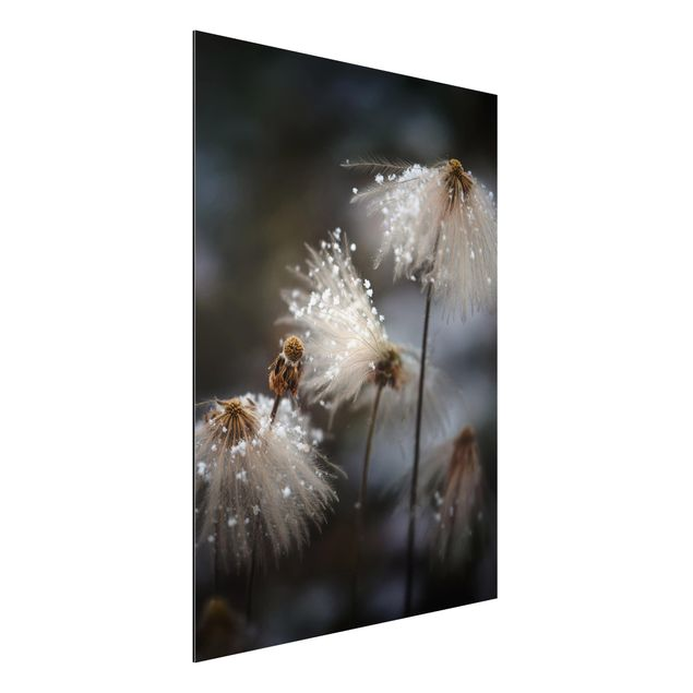 Aluminium Print - Pusteblumen mit Schneeflocken - Hochformat 4:3