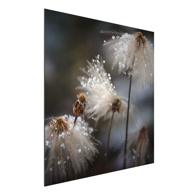 Aluminium Print - Pusteblumen mit Schneeflocken - Quadrat 1:1