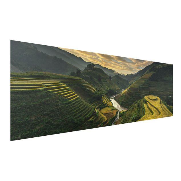 Alu-Dibond Bild - Reisplantagen in Vietnam