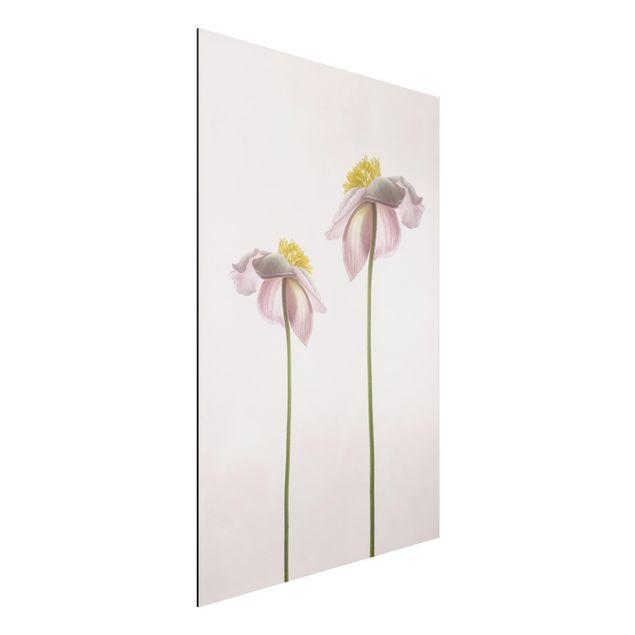 Aluminium Print - Rosa Anemonenblüten - Hochformat 3:2