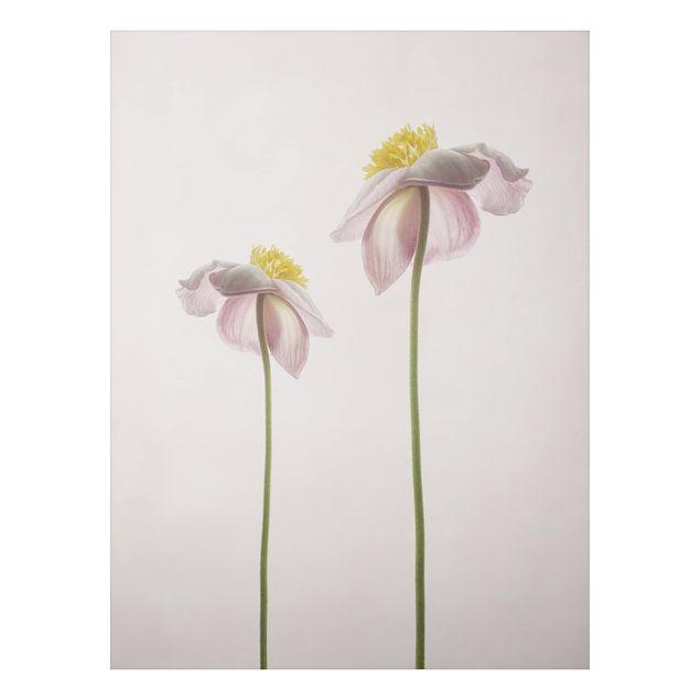 Aluminium Print - Rosa Anemonenblüten - Hochformat 4:3