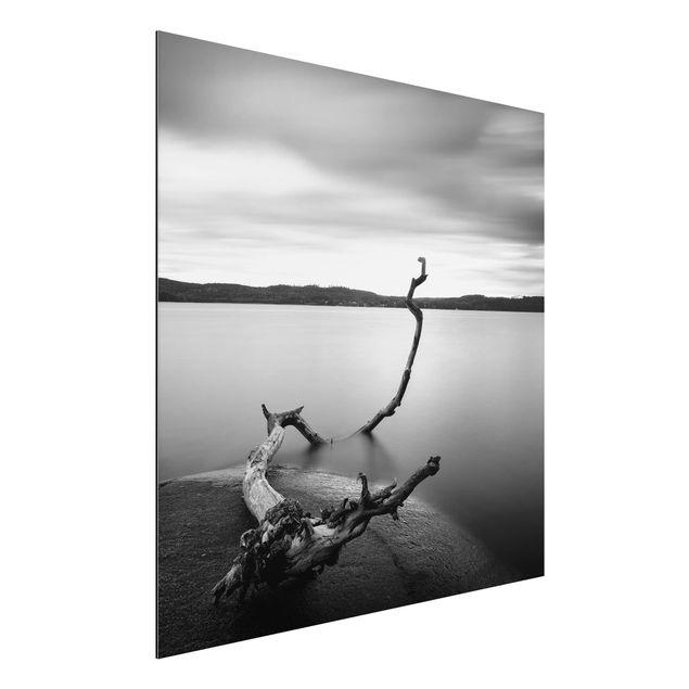 Aluminium Print - Sonnenuntergang am See schwarz-weiß - Quadrat 1:1