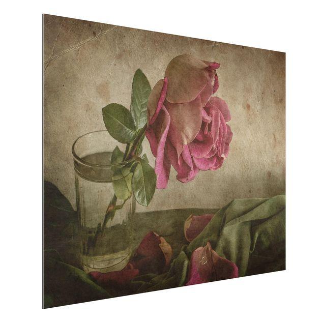 Alu-Dibond Bild - Tear of a Rose
