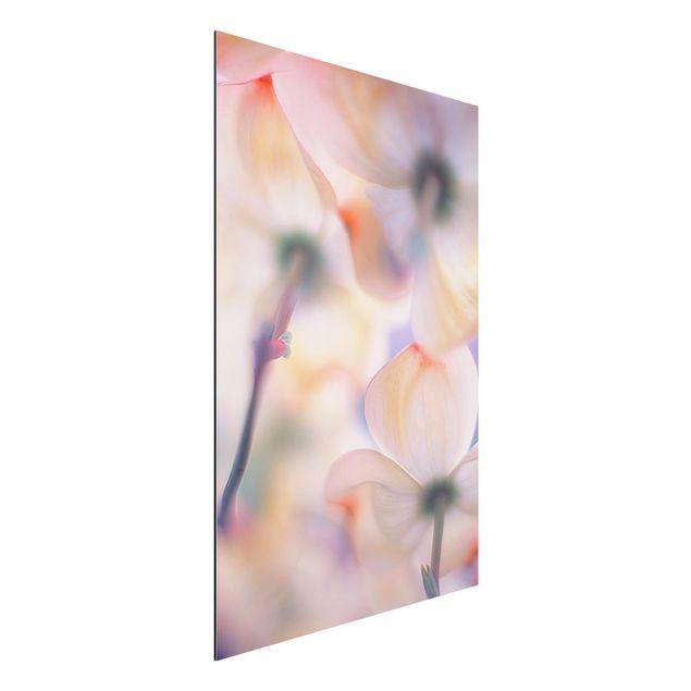 Alu-Dibond Bild - Unter Blüten