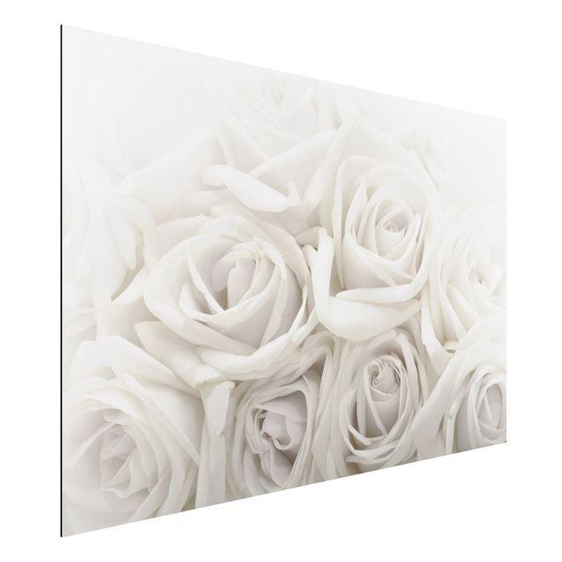 Alu-Dibond Bild - Weiße Rosen