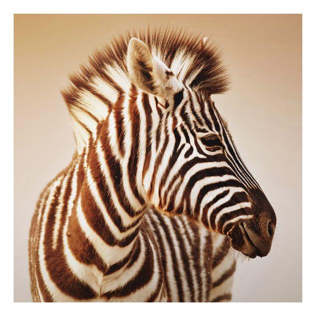 Alu-Dibond Bild - Zebra Baby Portrait