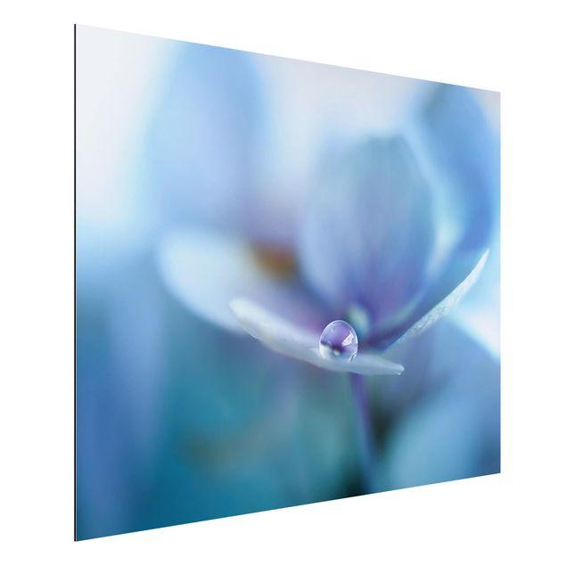 Aluminium Print - Wassertropfen Hortensienblüte - Querformat 3:4