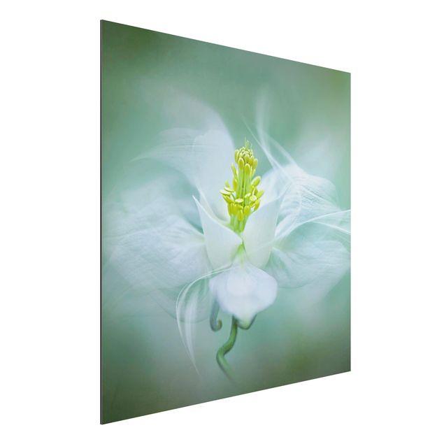 Alu-Dibond Bild - Weiße Akelei