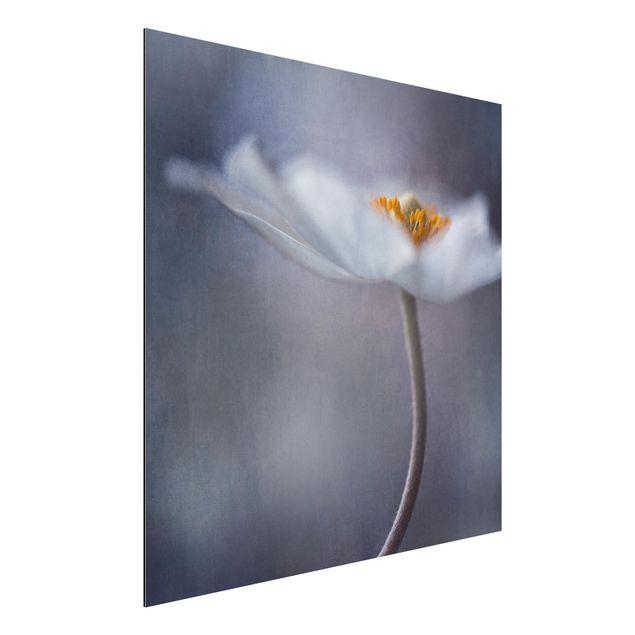 Alu-Dibond Bild - Weiße Anemonenblüte
