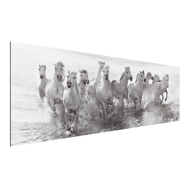 Alu-Dibond Bild - Weiße Pferde im Meer