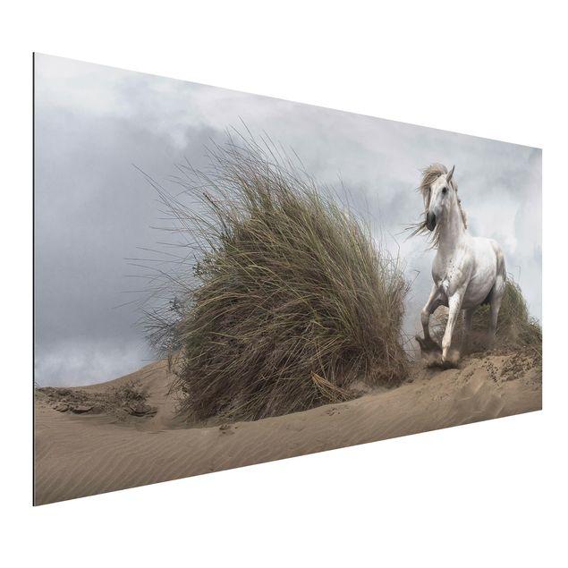 Alu-Dibond Bild - Weißes Pferd in den Dünen