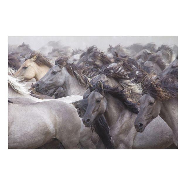 Alu-Dibond Bild - Wildpferde