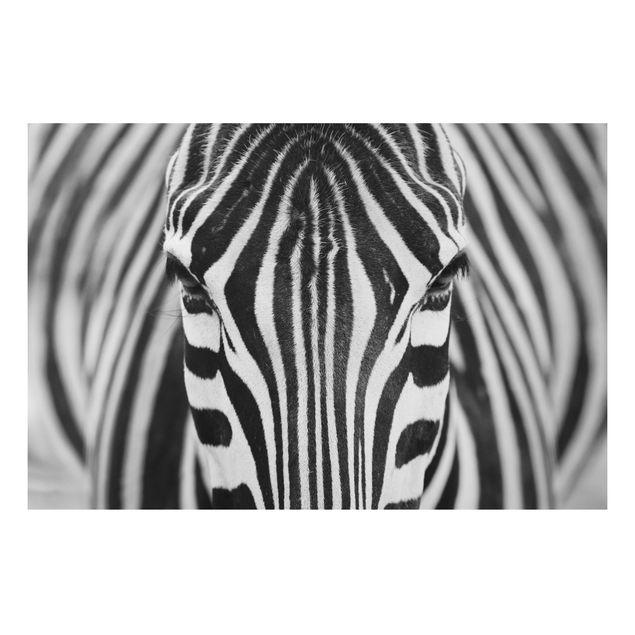Alu-Dibond Bild - Zebra Look