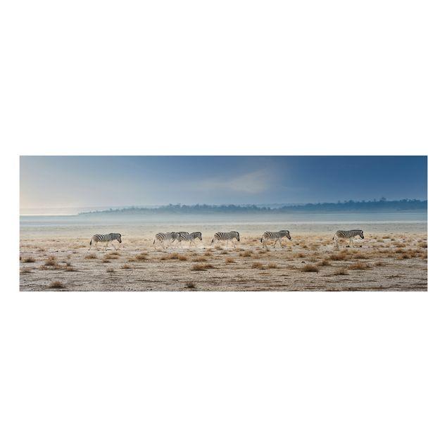 Alu-Dibond Bild - Zebra Promenade