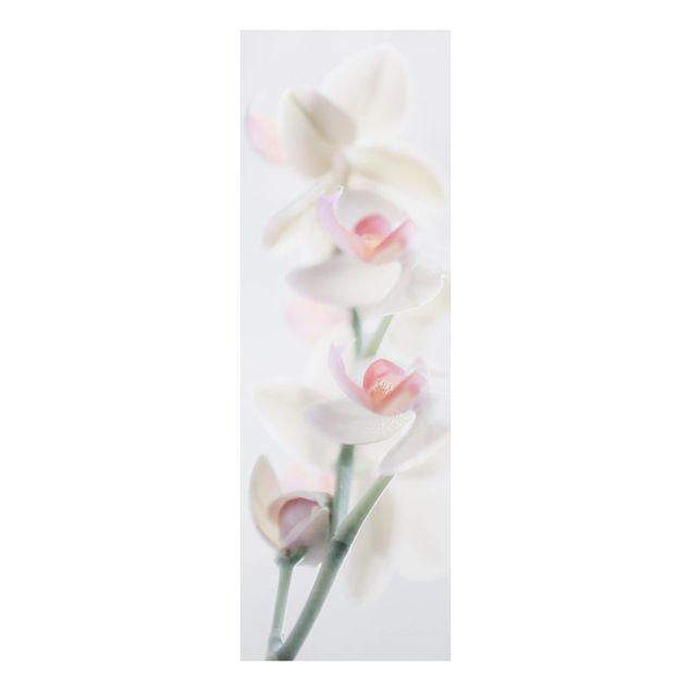 Alu-Dibond Bild - Zerbrechliche Orchidee
