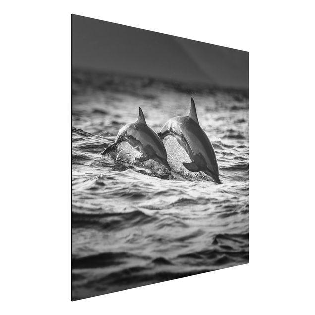 Aluminium Print - Zwei springende Delfine - Quadrat 1:1