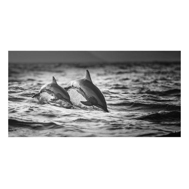 Aluminium Print - Zwei springende Delfine - Querformat 1:2
