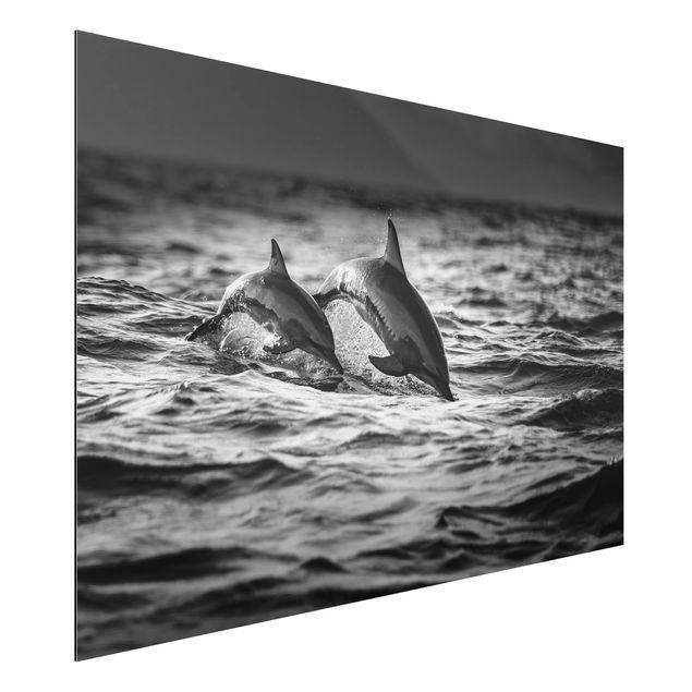 Aluminium Print - Zwei springende Delfine - Querformat 2:3