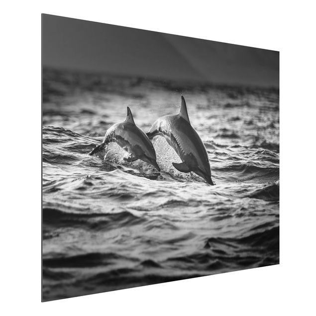 Aluminium Print - Zwei springende Delfine - Querformat 3:4