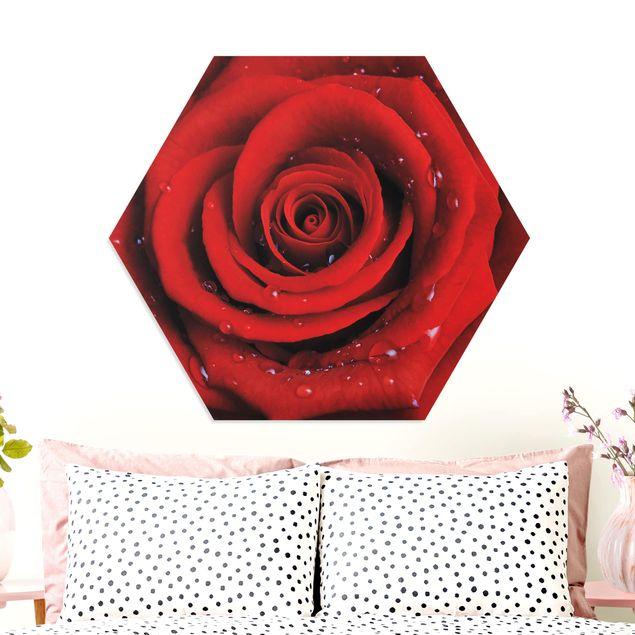 Hexagon Bild Forex - Rote Rose mit Wassertropfen