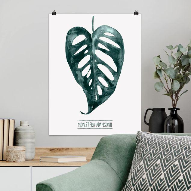 Poster - Smaragdgrüne Monstera Adansonii - Hochformat 3:4