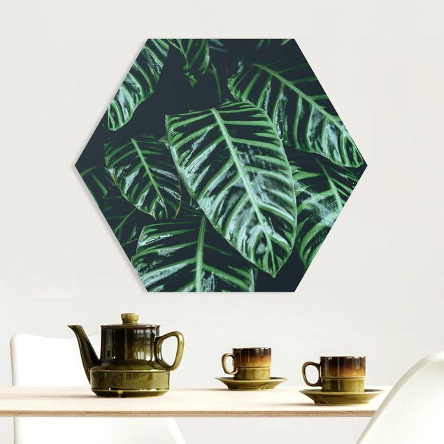 Hexagon Bild Forex - Tropische Pflanzen IV