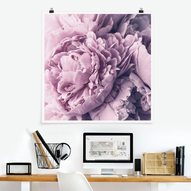 Poster - Lila Pfingstrosenblüten - Quadrat 1:1