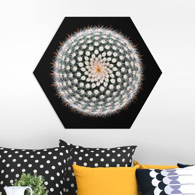 Hexagon Bild Forex - Kaktusblüte