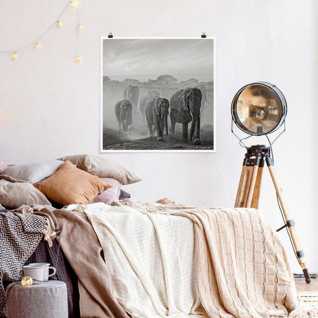 Poster - Elefantenherde - Quadrat 1:1