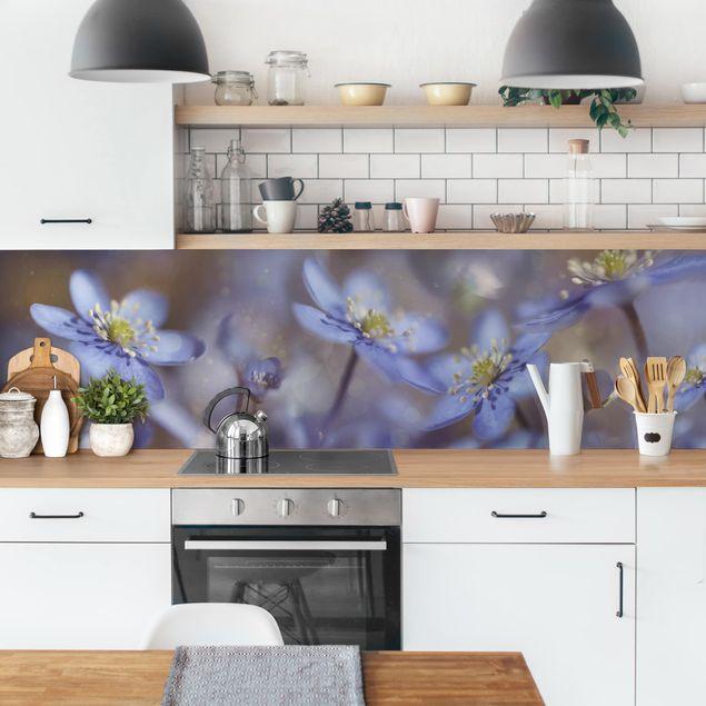 Küchenrückwand - Anemonen in Blau