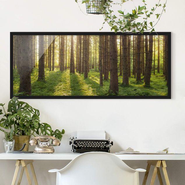 Bild mit Rahmen - Sonnenstrahlen in grünem Wald - Panorama Querformat