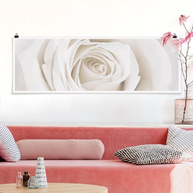 Poster - Pretty White Rose - Panorama Querformat