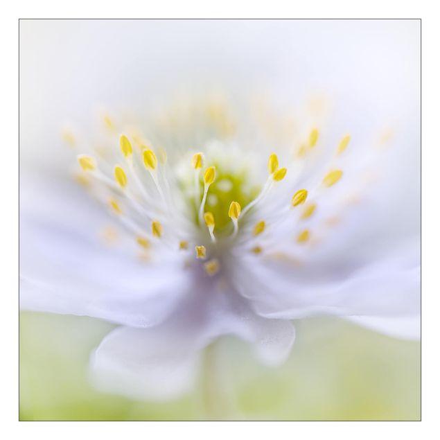 Beistelltisch - Anemonen Schönheit