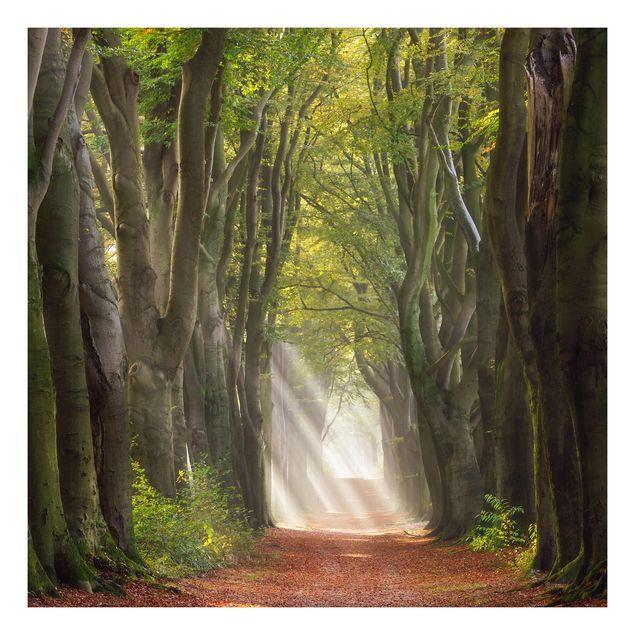 Beistelltisch - Herrlicher Tag im Wald